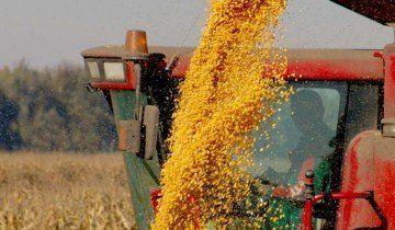 Уборка кукурузы на зерно, zerno-ua.com
