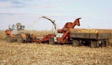 Уборка кукурузы в початках, land-tech.net