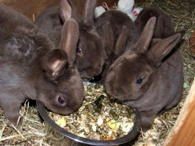 hrane za zečeve