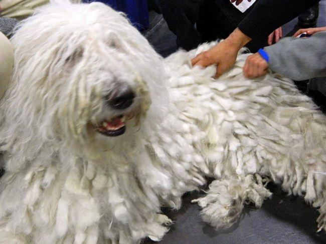 Vlasnici pasa bi trebao biti pažljivo briga za kućne ljubimce krzno.
