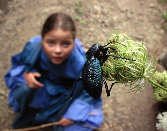 Čo končatiny u hmyzu, ako fungujú a aké funkcie sú vykonávané .... o tom viac nižšie.