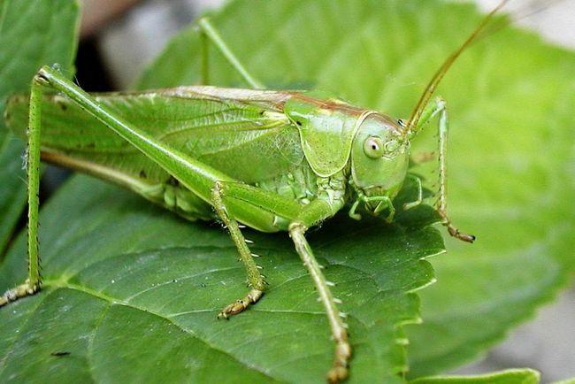 Nohy kobylky im umožní presunúť behom niekoľkých sekúnd až desiatok metrov.