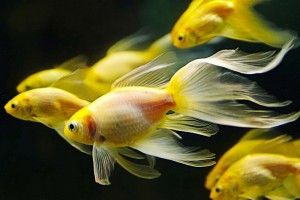 Корм для рыбок своими руками