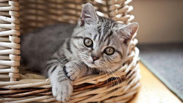 Кормление котят натуральными продуктами