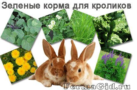 два кролика рядом с капустой, морковью и яблоком