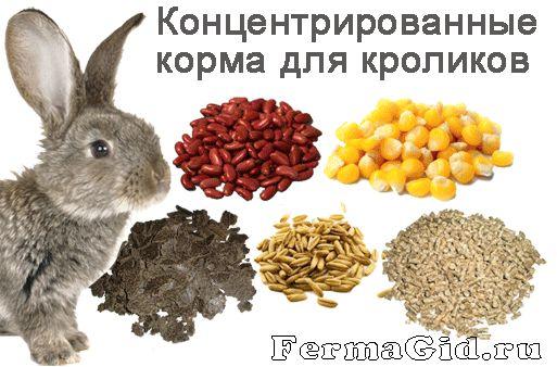 Рядом с кроликом концентрированные корма