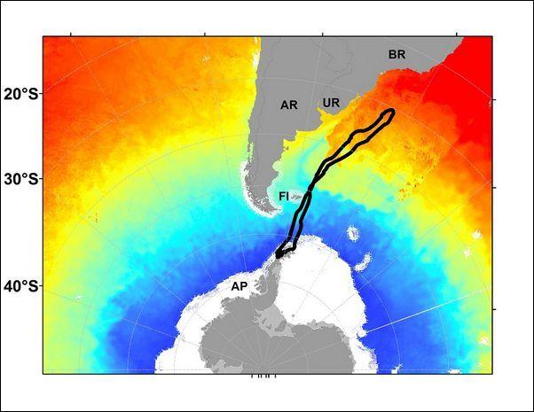 Vožnje kit migracije tokom mitarenja (Slika autori studije).