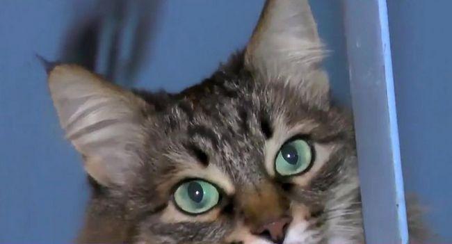 Mačka iz Kaluga spašeno napuštene bebe