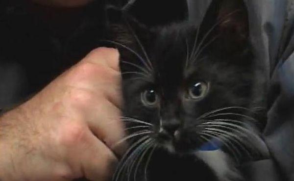 Mačka s mačićima patio od obučenog sokola