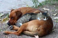 Kako napraviti prijatelje za pse i mačke