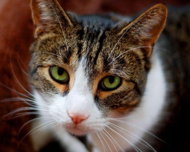 Mačke vratiti dobro za dobro