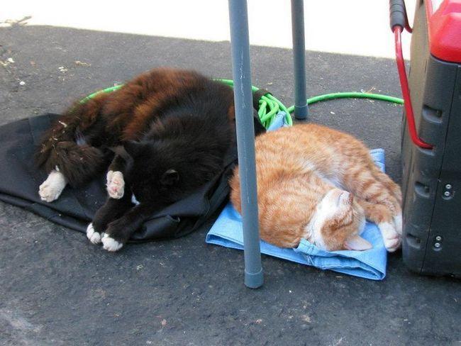 Mačka kuća u Kaliforniji