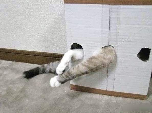 Drunken mačka