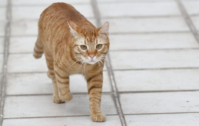 Кот ходит с кровью в туалет