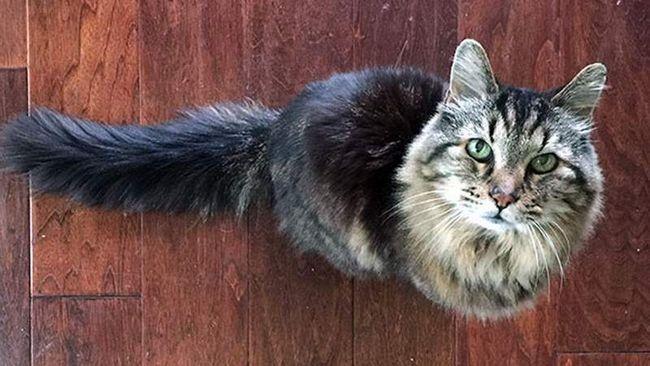 Velvet - stara mačka, starosti 26 godina.
