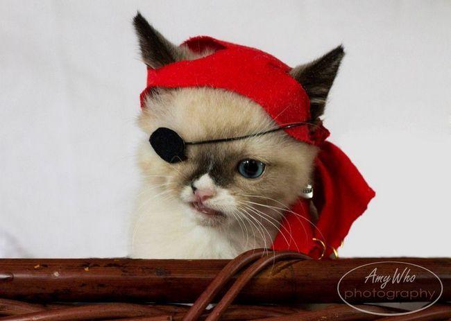 Mače iz skloništa pirata odlučili da pronađu nove vlasnike