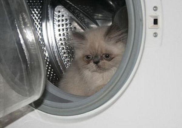 Kitten Ksenia - omiljenih Internet