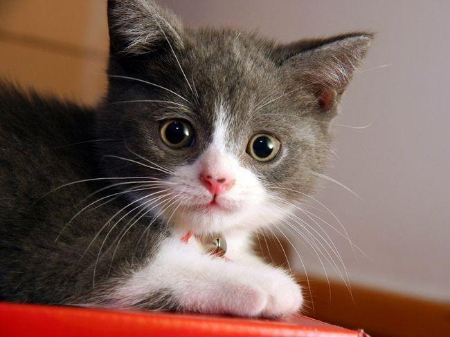 Котенок ждет хозяина и готовится к переезду в новый дом