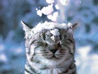 Whiskas Kitten boja