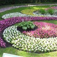 Tepih biljke