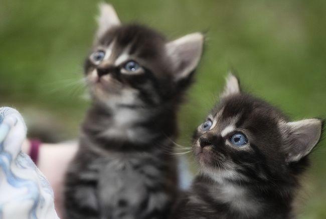 Imena za dječake mačke