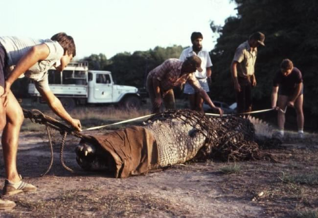 Krokodil nazvan Cassius - najveći od svih živih krokodil u zatočeništvu.