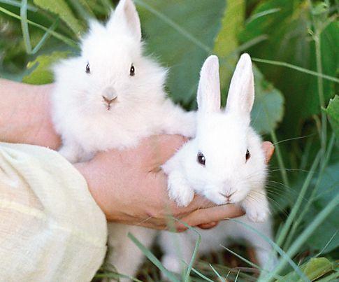 zečevi, šta da se hrane zečevima
