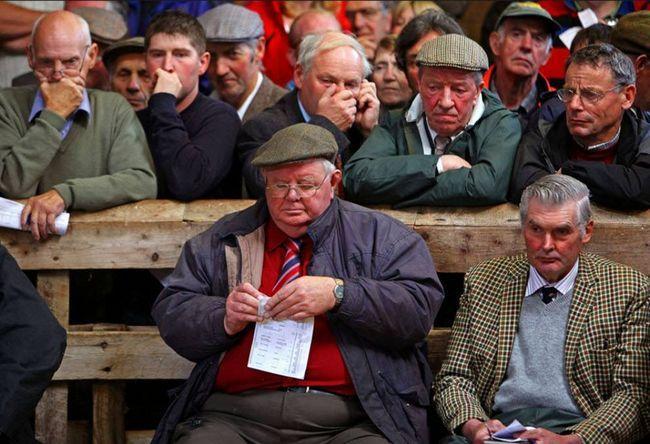 Najväčší európsky aukcie dobytka