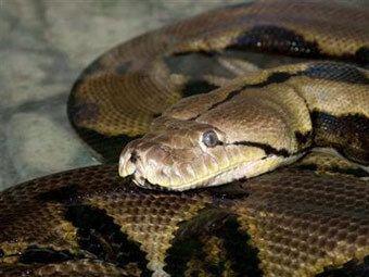 Columbus Zoo pronašao zamjenu za mrtve python-rekorder