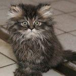 симптомы глистов у кошек