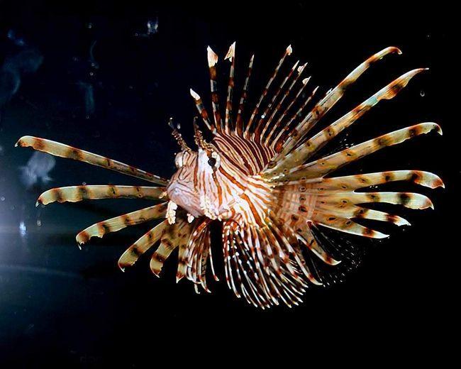 U dubinama mora, ova riba je još veličanstveno.