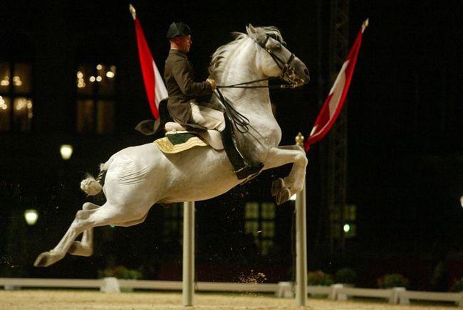 Lipitsianskaya konja.