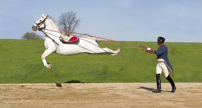 Capriol po lipitsianskoy konja.