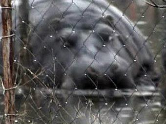 Pobegao konj dobrovoljno vratio u zoološkom vrtu