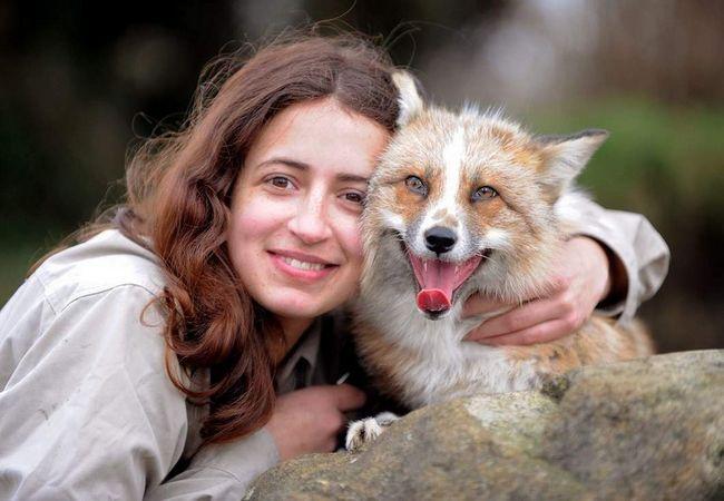 Fox se zove Todd misli da pas