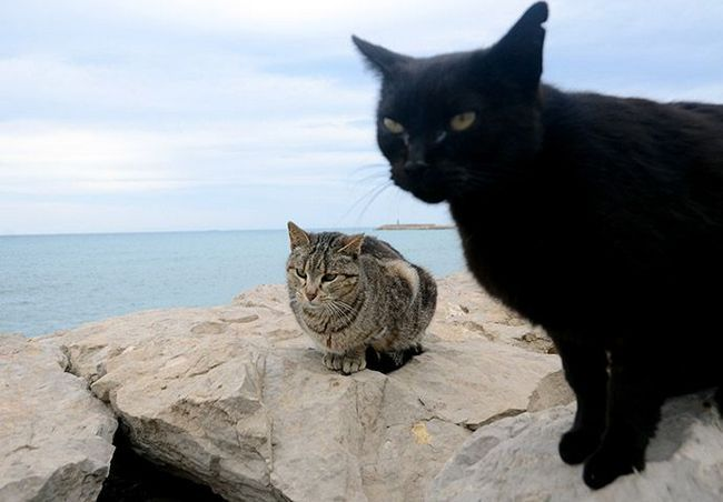 Ljudi bacaju crne mačke zbog njihove inphotogenic