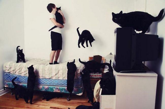 Ljudi s sklonost za mačke