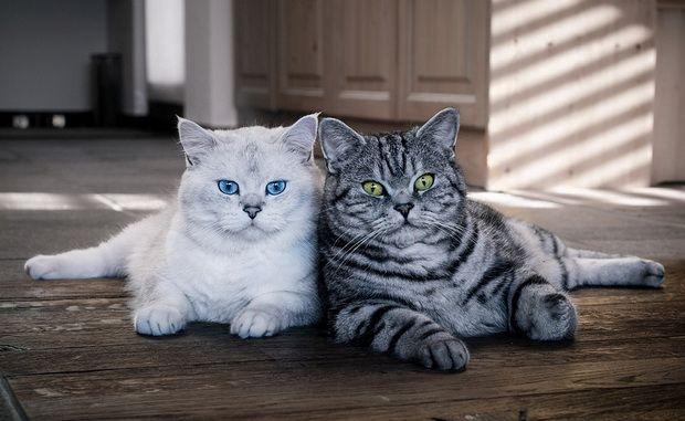 Ljudi u svijetu mačaka, ili ko smo na naše mačke