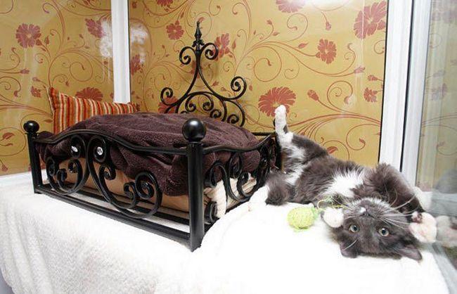 Lyuksovsky hotel za mačke