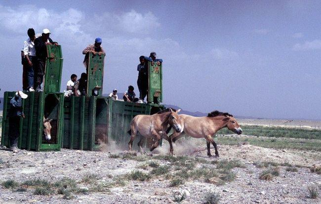Kone prepustený na slobodu