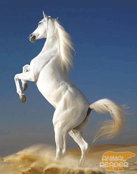 Kôň - skutočný priateľ človeka