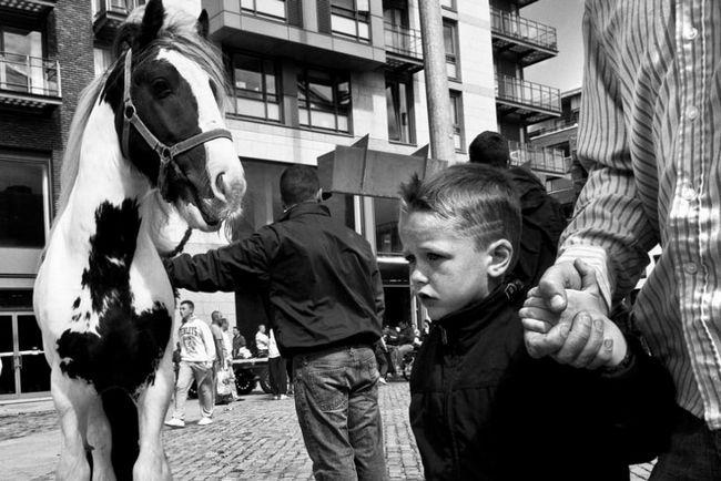 Kone na uliciach Dublinu