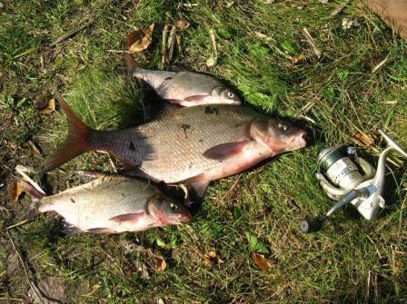 Deverika, deverika ribolov osnovna pravila