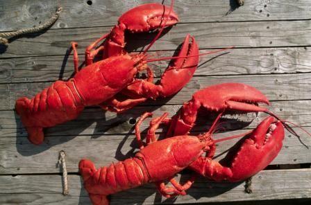 capturare crabi