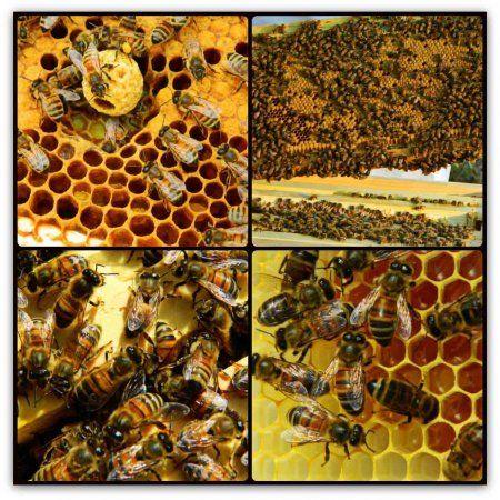 To najlepšie z chovu včiel