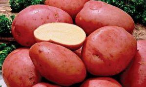 Желательно проводить опрыскивания картофеля