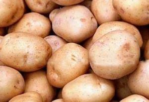 Сажать картофель лучше начинать в мае