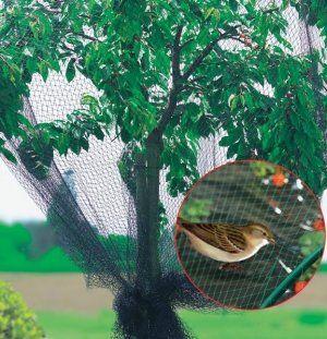 Сетка защитит черешню от птиц