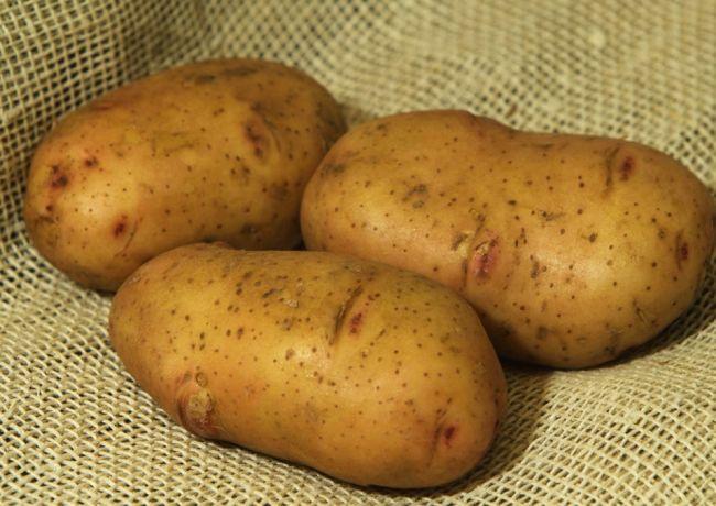 Сорт картофеля «Жуковский ранний»