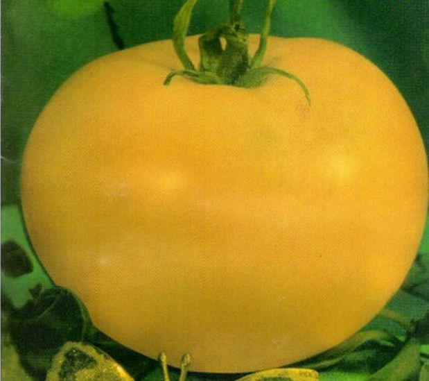 Sorte paradajza Lotus